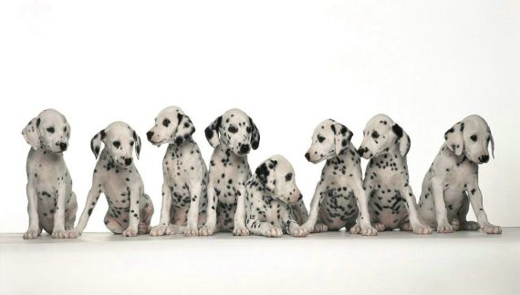 Dogs, cats & more animals… wallpaper