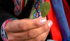Bolivia permesso usare le foglie della coca