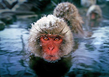 Scimmia in inverno