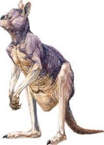 Procoptodon, il canguro gigante