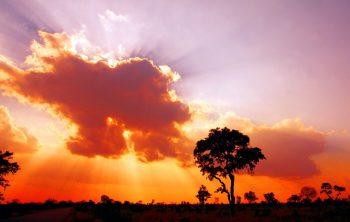 Alidays_Sudafrica-Kruger National Park