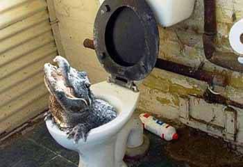 Alligatori nelle fogne