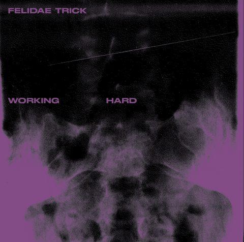 Felidae Trick - Working Hard