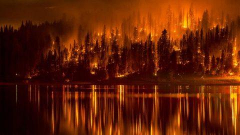 foresta in fiamme