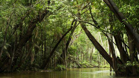 amazzonia-brasiliana